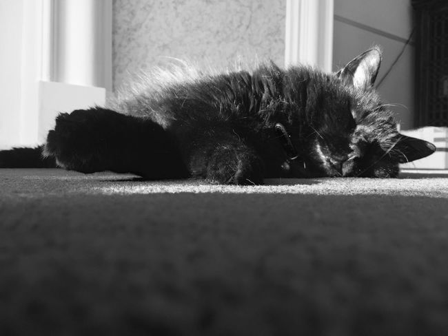 Black cat sleeping First Eyeem Photo