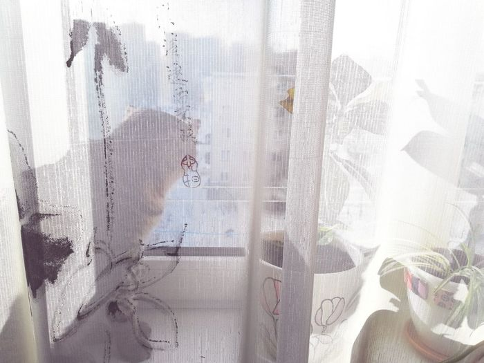 Close-up of person looking through window