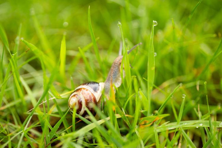A snail crawls