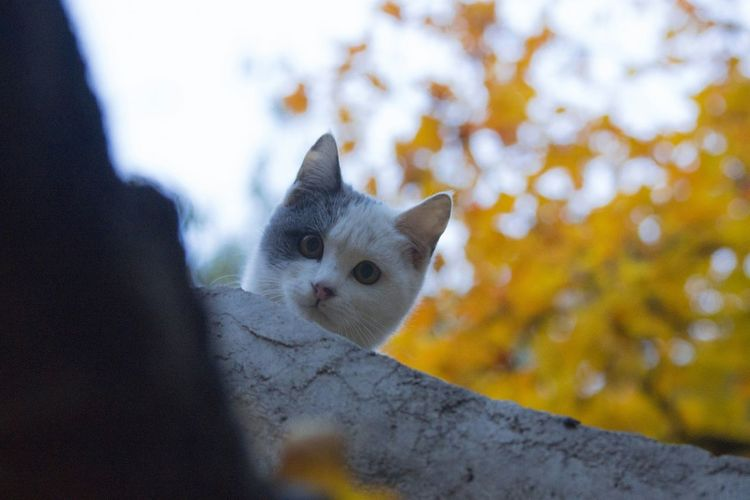 Low Angle Portrait Of A Cat
