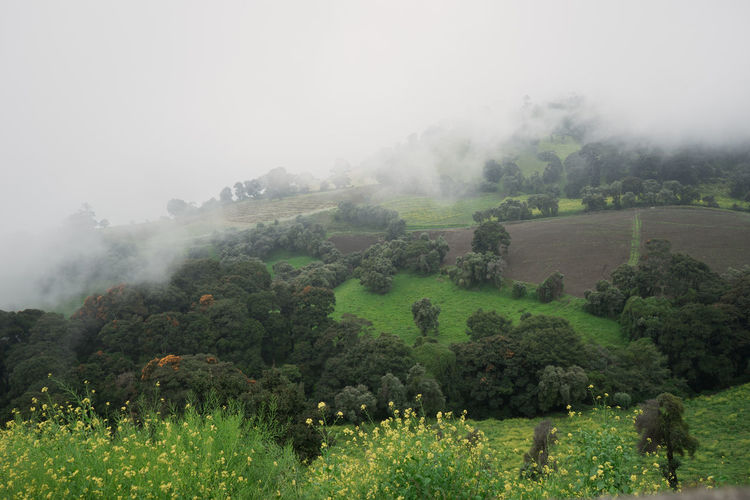 Costa Rica Agriculture Beauty In Nature Field Fog Landscape Nature No People Outdoors Rural Scene Scenics Tranquil Scene Tree