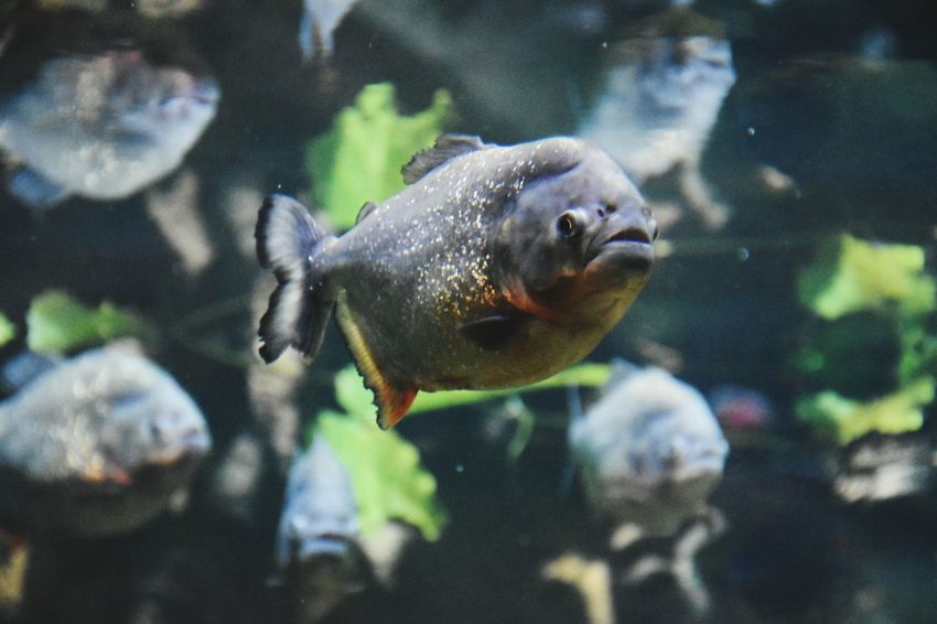 Holidays in Russia Caution ⚠️ Piranhas