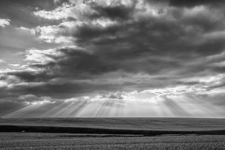 Dramatic summer morning landscape with wheat field in Central Bohemian Uplands, Czech Republic. Uplands Agricultural Agriculture Barley Bohemian Bread Central Cereal Cloud Cloudy Crops Cultivated Czech Republic Dark Dramatic Dusk Empty Environment Farm Farming Field Golden Grain Grow Harvest Horizon Land Landscape Light Nature Nobody Outdoors Panorama Plant Plantation Rain Ripe Scenic Season  Sky Storm Summer Sunlight Vista Way Weather Wheat