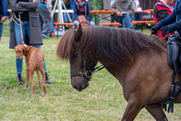 LWL Open Air Museum Detmold Mammal Domestic Animals Domestic Pets Vertebrate Group Of Animals Horse Incidental People Group Of People Day Focus On Foreground Standing Two Animals Herbivorous Real People People Outdoors Icelandic Horse Dog