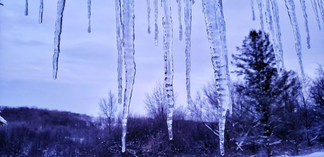 Panoramic shot of frozen trees on land against sky