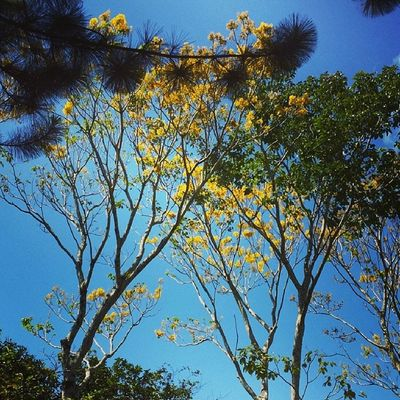 Flowers of summer... Malaybalay