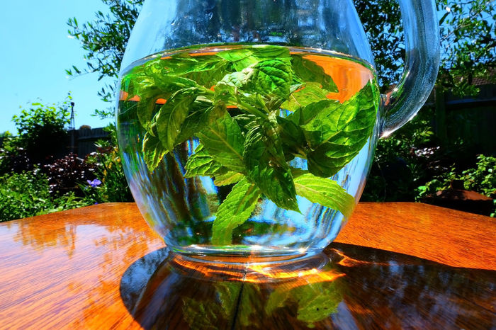 Close-up Drink Drinking Glass Fishbowl Freshness Glass - Material Green Color Growth Jar Leaf Liquid Mint Mint Green Mint Leaves Mint Water Nature No People Outdoors Plant Refreshment Summer Picnic Table Transparent Tree Water