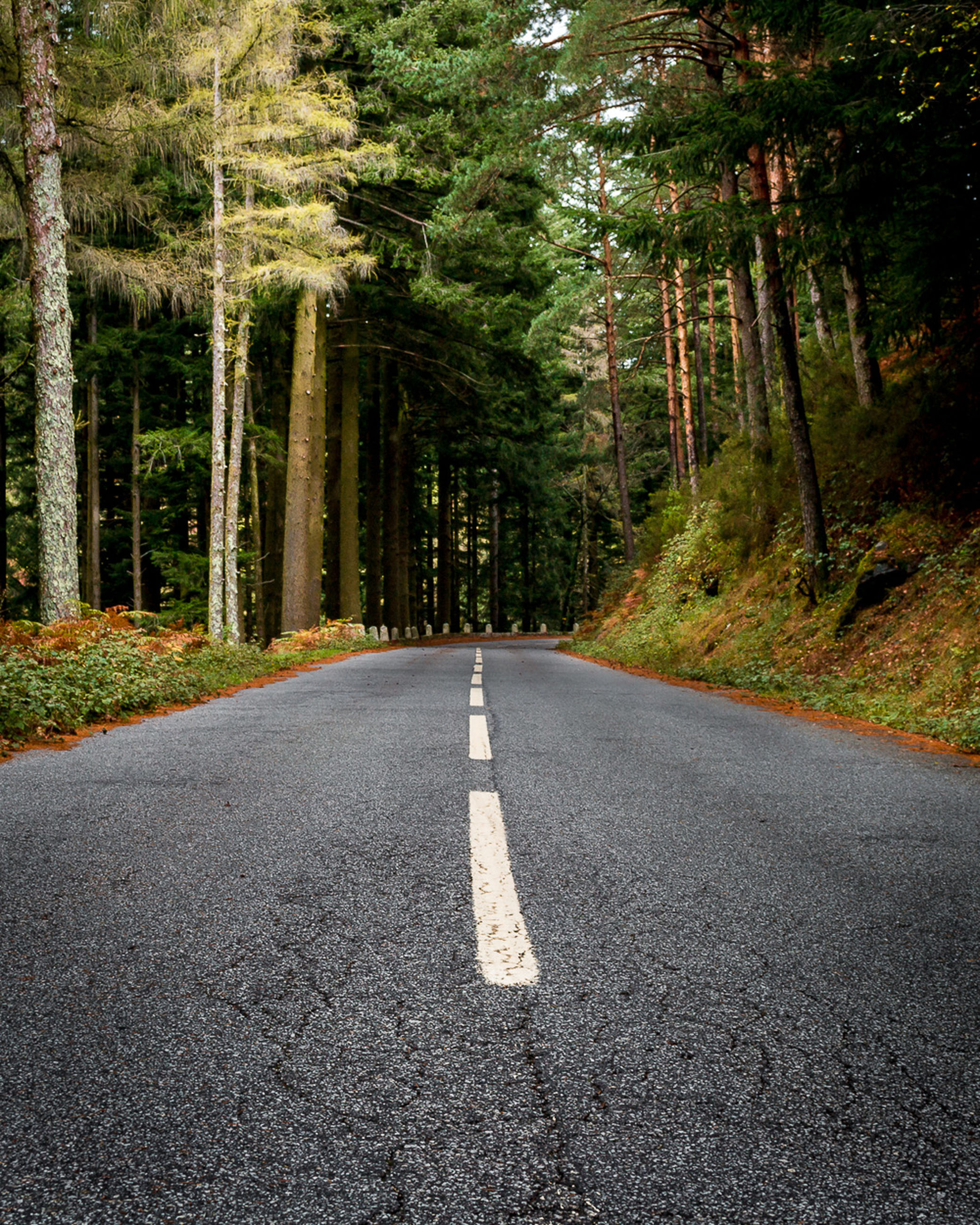 road, forest, tree, direction, plant, land, transportation, the way forward, no people, nature, sign, asphalt, day, symbol, road marking, landscape, country road, rural scene, beauty in nature, country, woodland, outdoors, pine tree, pine woodland