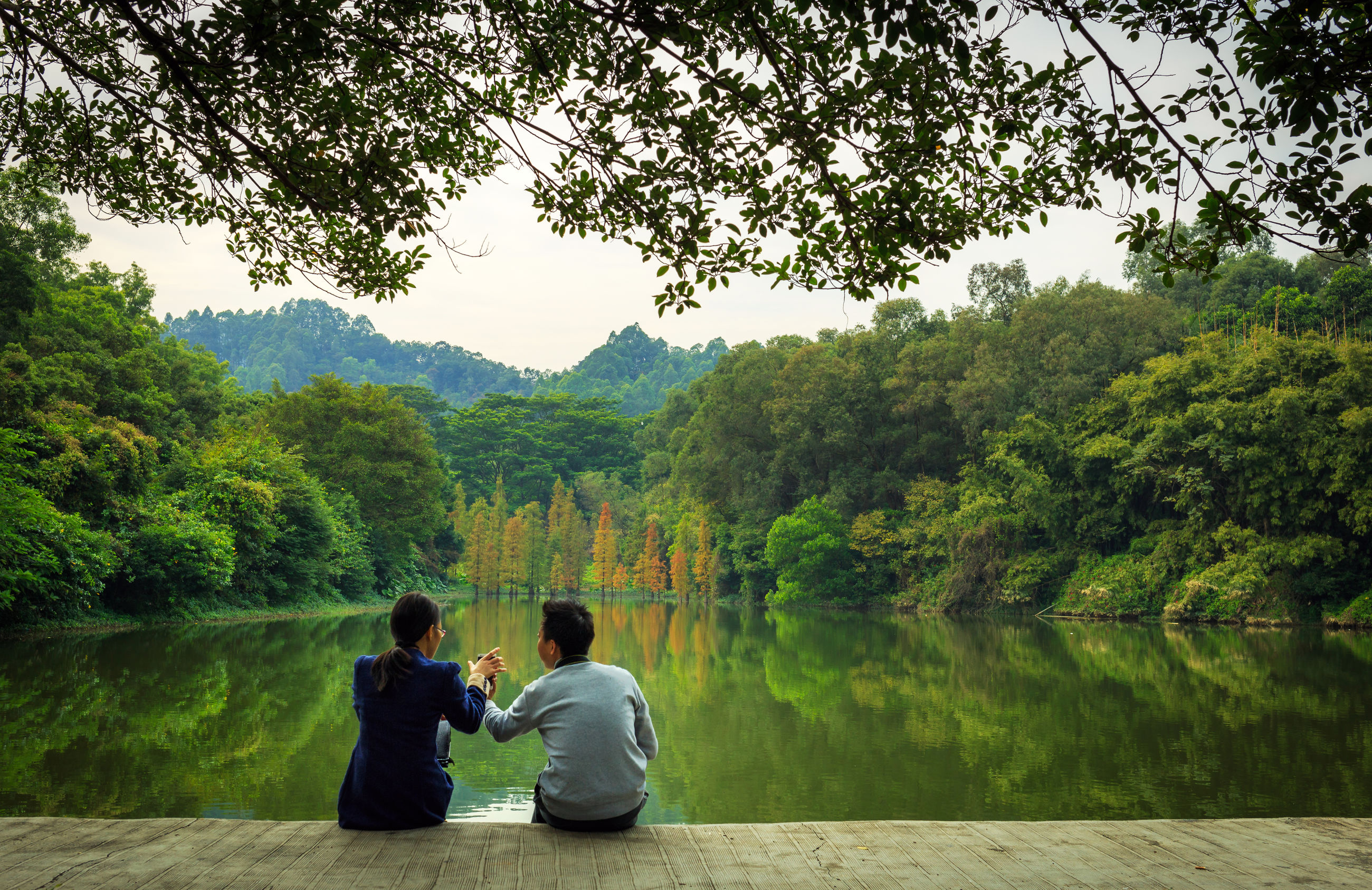 tree, lifestyles, leisure activity, rear view, tranquility, water, men, tranquil scene, lake, scenics, nature, casual clothing, beauty in nature, person, sitting, relaxation, green color