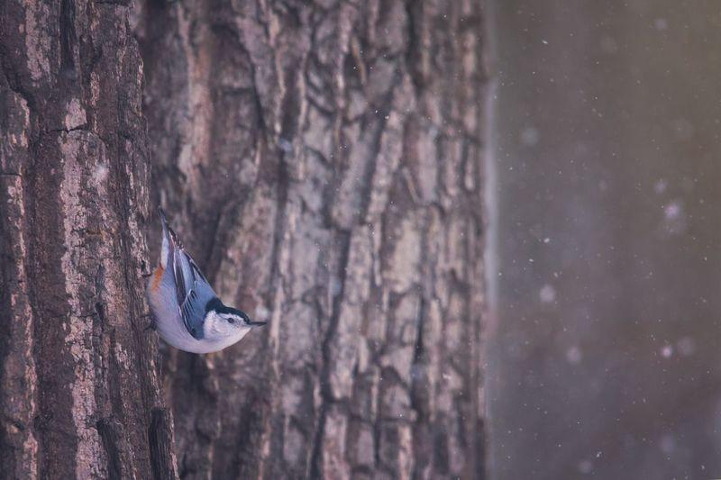 Close-up of bird on tree trunk