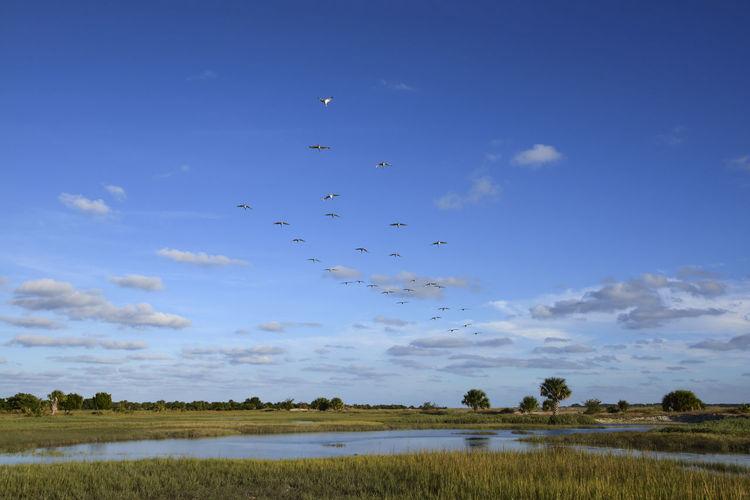 Flock of birds flying over river against sky