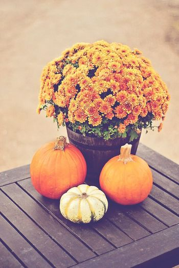 Fall Autumn Autumn Colors Pumpkins Farm Life Rustic Beauty Orange Orangecolor Mums Floralarrangiment