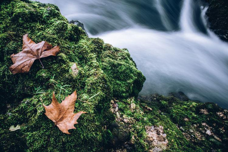 fall leaf on