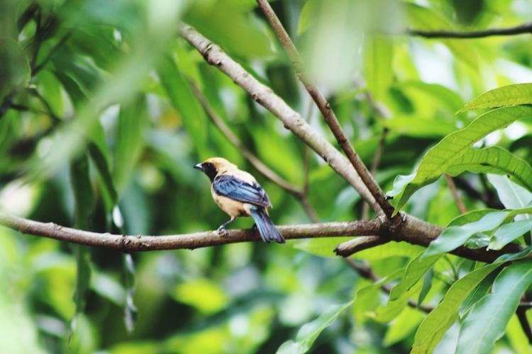 bird Bird Tree