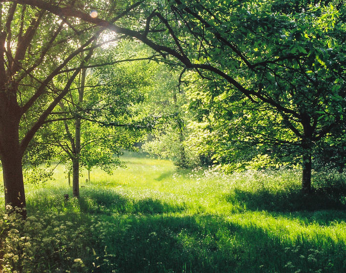 Summertime. 35mmfilmphoto 35mm Film 35mmfilmphotography Analogue Photography Landscape_Collection Nikon Nikon F3 Beauty In Nature Day Forest Grass Green Color Growth Kodak Colorplus200 Land Landscape Landscape_photography Nature Nikonphotography No People Non-urban Scene Outdoors Plant Scenics - Nature Tranquility Tree The Great Outdoors - 2018 EyeEm Awards