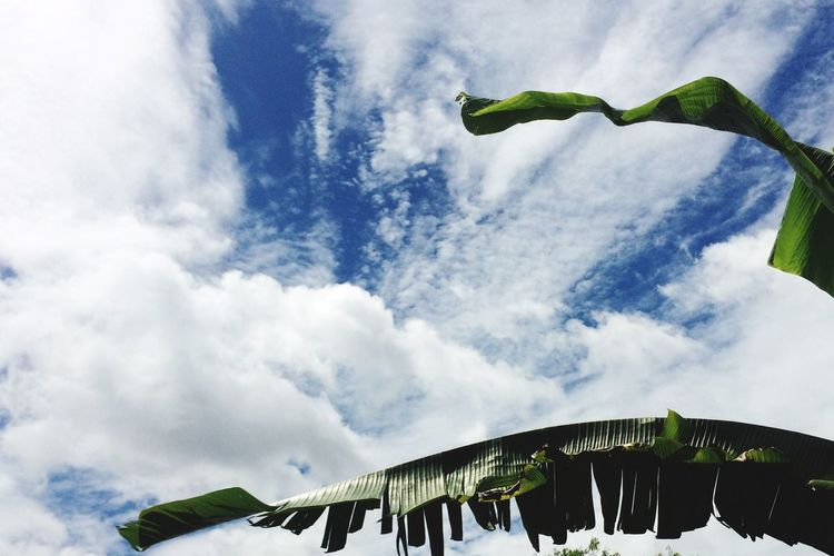Low Angle View Sky Cloud - Sky Green Color Leaf Day Outdoors Banana Tree Growth Nature No People Beauty In Nature EyeEmNewHere Let's Go. Together.