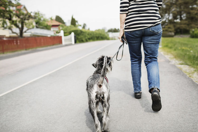 Low section of person with dog on road