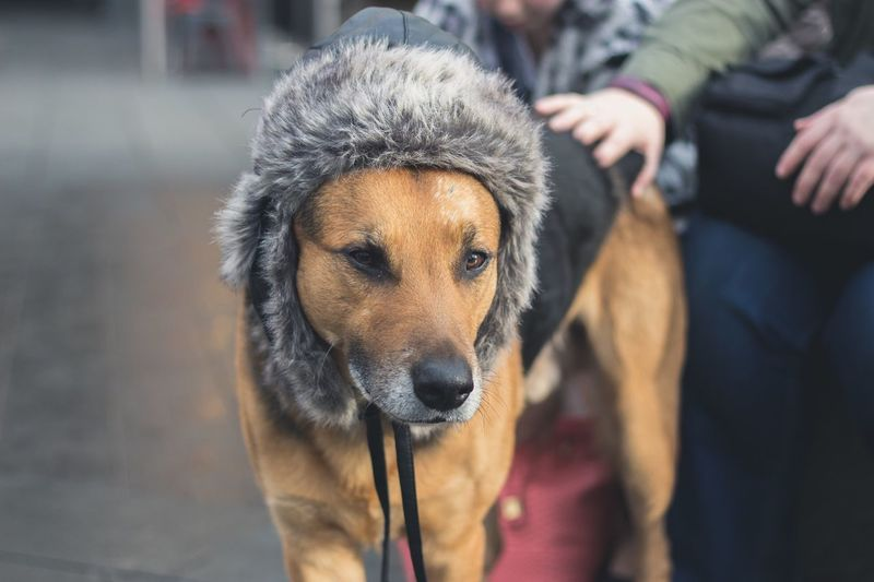 Trapper Hat Dog - Dog Pets Outdoors Dogs Dogs Of EyeEm First Eyeem Photo The Street Photographer EyeEmNewHere The Street Photographer - 2017 EyeEm Awards The Portraitist - 2017 EyeEm Awards BYOPaper!