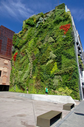 Green wall next to the CaixaForum, desinged by French botanist Patrick Blanc City Green Wall Madrid SPAIN Urban Gardening Architecture Botanical Btany Caixaforum Day Ecology Green Color Greenery Growth Nature Outdoors Patrick Blanc Sky Sunlight Town Urban