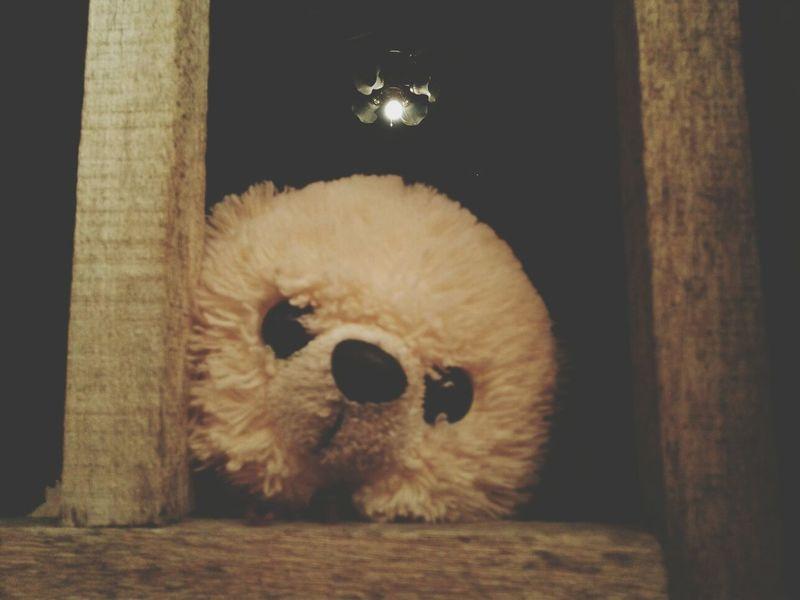 Teddy Bears Samsungphotography 5mpcamera Simple Photography