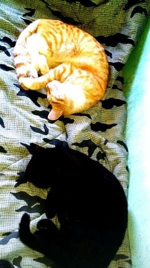 Cats Dreaming Cats 🐱 Cats Sleeping Cats Sleeping Style Tijuana, Mexico Life In Colors Light Reflections Light