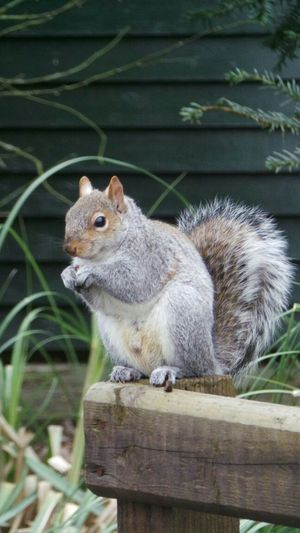 a walk in the park Practising Taking Photos Saltwell Park Squirrel