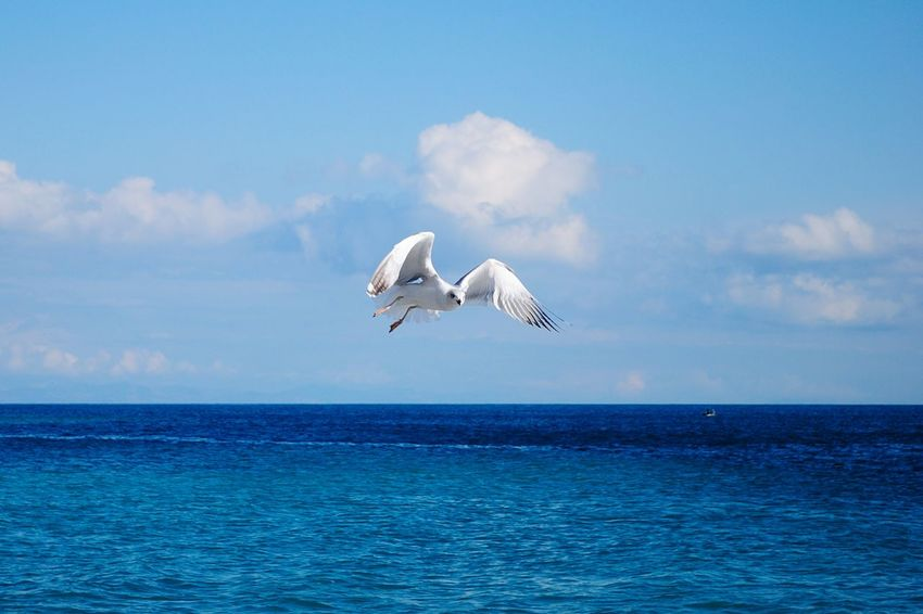 Flying Animal Themes Bird Animals In The Wild Animal Wildlife One Animal Sea No People Outdoors Day Scenics Nature Beauty In Nature Sky Seagulls And Sea Sea Bird Seagulls In Flight Seagull White Bird Flying Birds Sea Life Background Outdoor Blue Water
