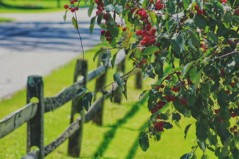 Beautiful Nature Nature_perfection Tree_collection  Treegasmic Tuesday Red Berries Nature_collection EyeEm Nature Lover EyeEm Best Shots - Nature MotherNaturesGift Endofsummer