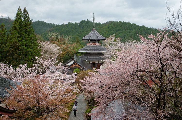 Tree Architecture Sky Religion Cloud - Sky Nature Outdoors Travel Destinations Mountain No People Spirituality Landscape Place Of Worship Beauty In Nature Built Structure Day Growth Building Exterior Blossom Springtime Beauty In Nature Rain Cherry Blossom Yoshinoyama Japan