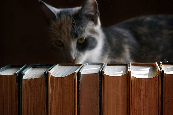 Kitty and book Cat Cat Lovers Close-up Indoors  Pets Domestic Animals Kitty Book