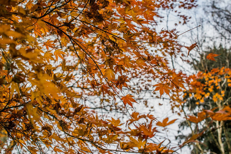 Low angle view of tree during autumn