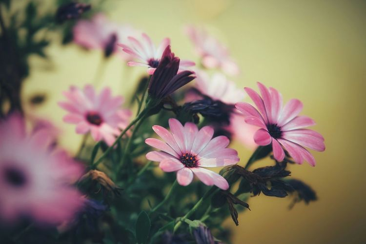 Flower Plant Nature Pink Color Day No People Fragility Beauty In Nature Flower Head Outdoors Close-up Freshness Eastern Purple Coneflower