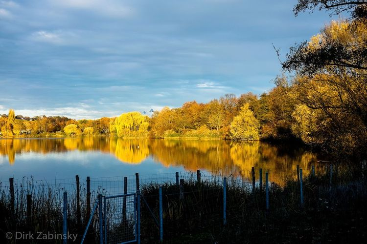 Autumn at the lake Plant Tree Sky Water Cloud - Sky Reflection Autumn Mood Lake Nature Beauty In Nature Outdoors Idyllic Day Autumn