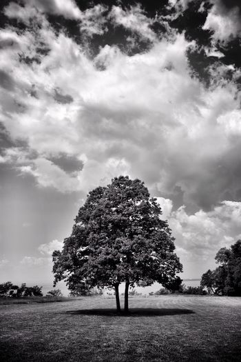 Tree Cloud - Sky Sky Nature Outdoors Beauty In Nature Landscape Daylight Nikonphotography Nature Blackandwhite Photography