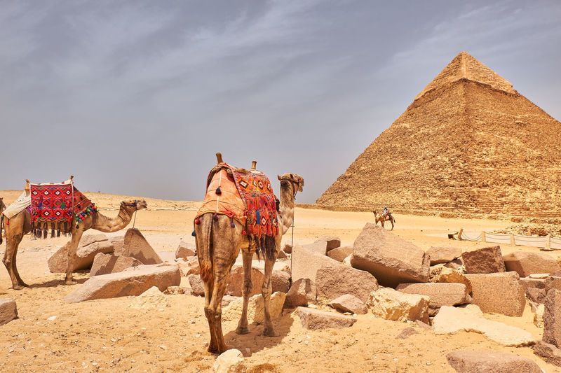 Panoramic view of a desert