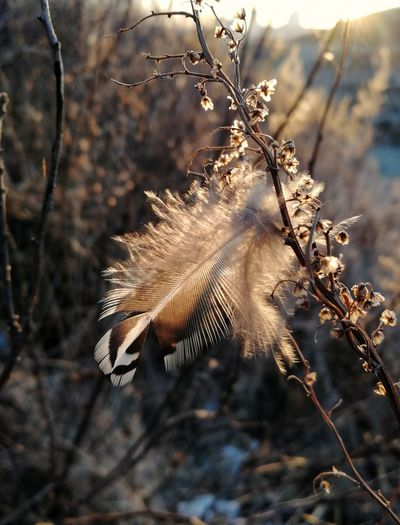 Close-up of feather on dried plant