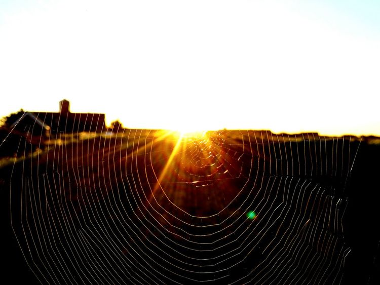 Sunset Lighthouse Landscape Sunset_collection EyeEm Gallery The Week On EyeEm Check This Out EyeEm Best Shots Eye4photography  Sky Nature No People Spider Nature_collection Eyenaturelover Spiderweb In Morning Dew Spider Web Perspectives On Nature