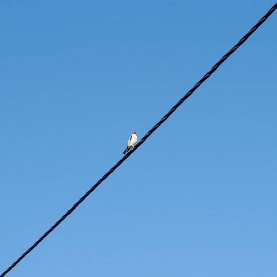 Low angle view of birds on cable against clear blue sky