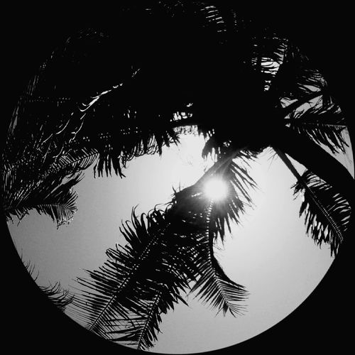 Simply things of the day Nature Silhouette Sky Beauty In Nature Outdoors Scenics Landscape Sweet♡ Old-fashioned Enjoy Little Things Photooftheday Beauty In Nature Peace And Love ✌❤ Classic Art Wildlife & Nature Black & White Lifestyles With Love Cara Chill Out NaughtyBaywatch