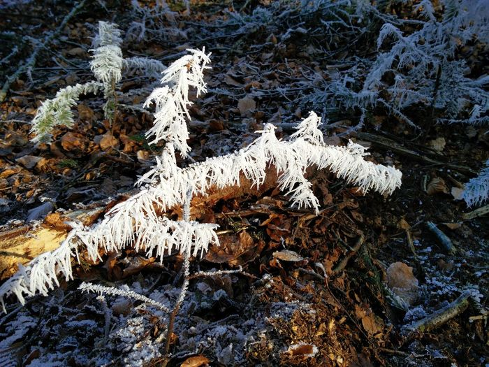 Beauty In Nature Branch Close-up Cold Temperature Day Ice Nature No People Outdoors Snow Spikes Tree Winter