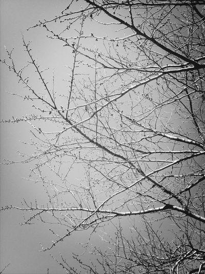 Tree&sky