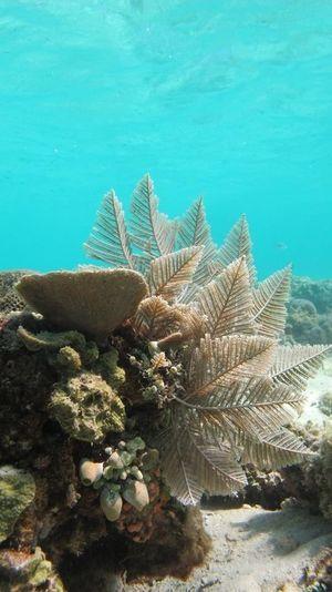 Underwaterphotography Underwaterlover Coral