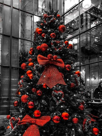 Festive feelings Christmas Decoration Christmas Decoration Holiday Celebration Christmas Ornament Red Built Structure Illuminated Hanging Christmas Lights Architecture No People christmas tree Tree Holiday - Event Window Nature Outdoors