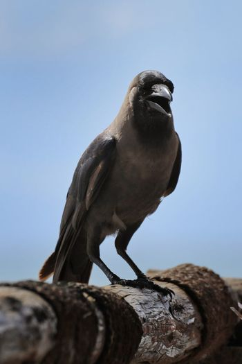 Close-up of bird perching on wood against clear sky