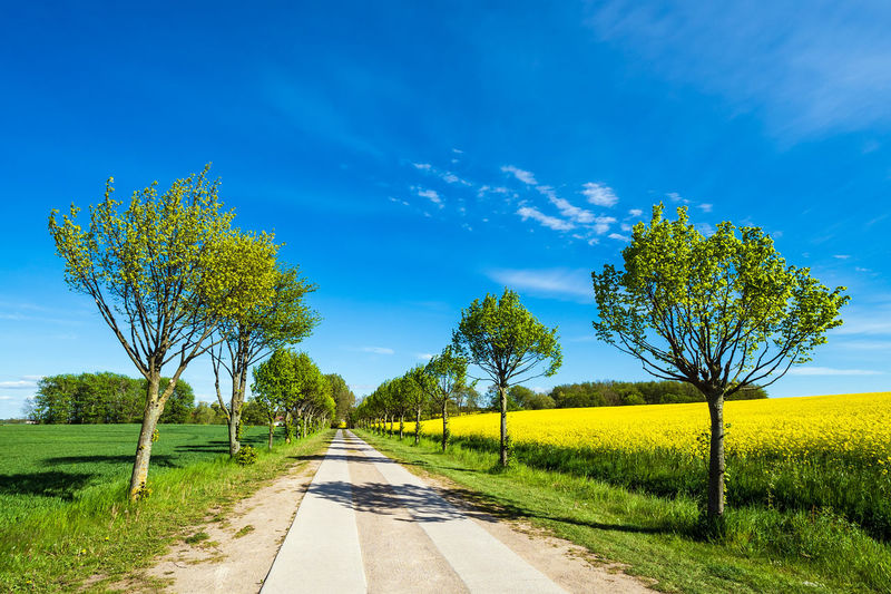 Road with trees on a canola field. Outdoors Grass Road Nature Environment Land Scenics - Nature No People Growth Field Landscape Blue Tranquil Scene Beauty In Nature The Way Forward Tree Plant Sky Meadow Canola Field Rapeseed Travel Destinations Travel Tourism Relaxing Agriculture