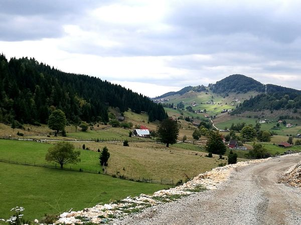 Nature Hills Sheep Rural Countryside Nomen Trekking Farm Isolated Backintime Green Bucegi Natural Park Bran Carpathian Mountains