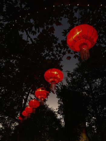 hanging lanterns. Crown Victoria Australia Melbourne Chinese Lantern Red Lantern Night Chinese Lantern Festival Hanging Low Angle View Chinese New Year Paper Lantern Outdoors Lighting Equipment No People