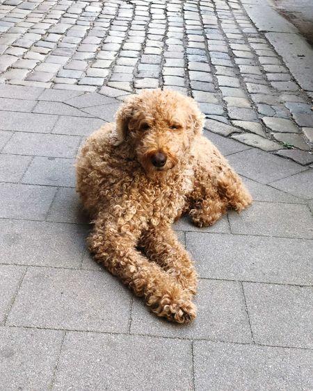 High angle view of dog on street