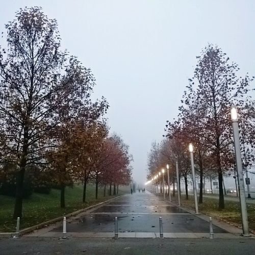 Into the fog... (04th December 2015) Cellphone Photography City Croatia My World Things I'm Thankful For Little Things Citylife One Photo Every Day Fog City Morning December 2015 Trees Autumn People