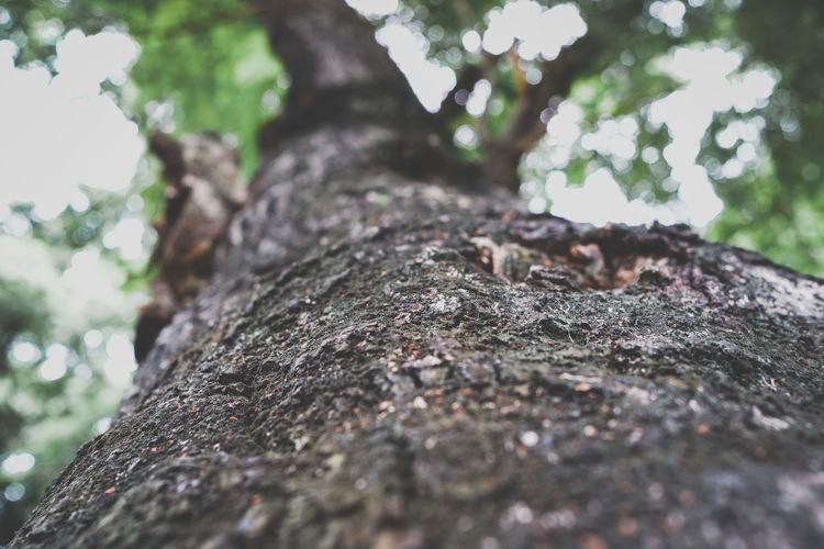 Tree 🌳 MRoZAM